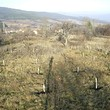 Agricultural plot of land for sale near Kyustendil