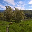 Large land for sale near Sandanski