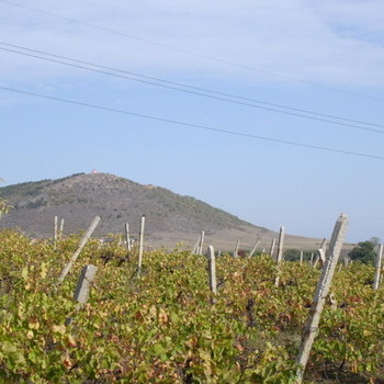 Agricultural land for sale in bulgaria, farm land in bulgaria