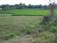 A Huge Land At The End Of A Village in Elhovo