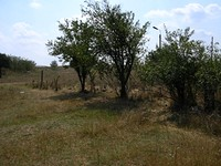 Cheap Plot Of Land in Elhovo