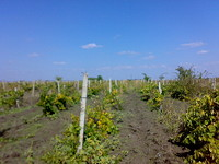 Land for sale near Pomorie